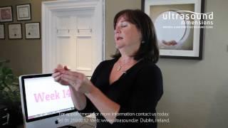 14 Weeks Pregnant - Your 14th Week Of Pregnancy