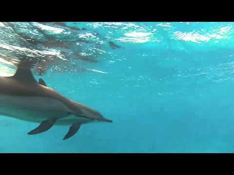 Kaarten met dolfijnen, Dolphin Dancer In Sataya