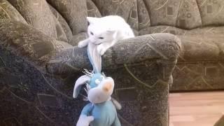 Смешное видео Приколы 2019. Такие смешные кошки и собаки!