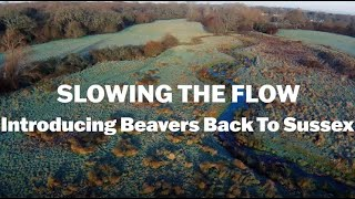 Thumbnail for Slowing the Flow: Introducing Beavers Back to Sussex