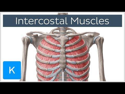 Les meilleur lexercice pour les plus larges muscles du dos