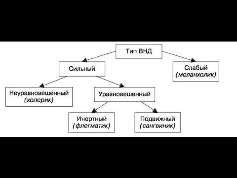 35. Фаза и тип нервной системы.