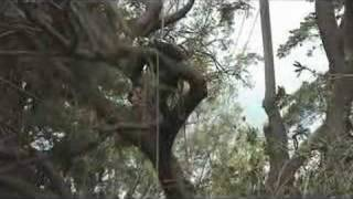 preview picture of video 'Kula Botanical Gardens: Visiting Arborist'