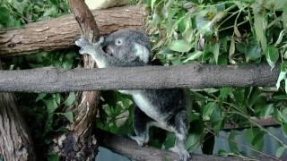 Australian Wildlife at Koala Gardens, Kuranda