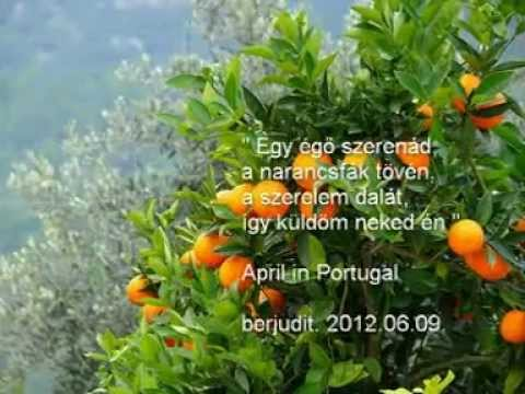 randevú egy portugál férfi hét napos vt