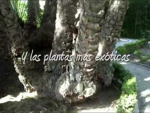 De botanische tuin van Valencia