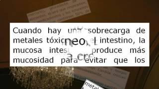 La Candidiasis y la Conexi n con la Toxicidad de Metales Por Infecciones por Hongos No Más