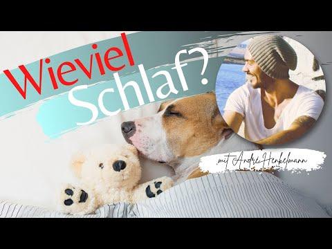Wie viel Schlaf braucht dein Hund?