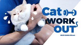 โอ้ว พระเจ้าจอร์จมันยอดมาก 💪🏻 Cat Workout