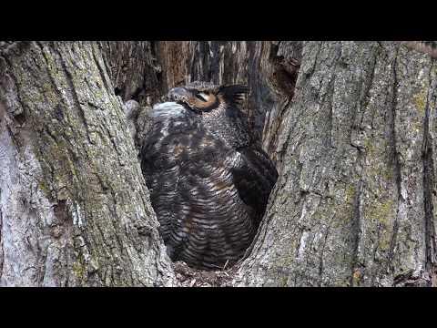 Owl Roto