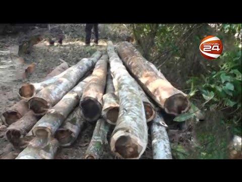 হবিগঞ্জের রেমা কালেঙ্গা বনাঞ্চলে চলছে গাছ কাটার মহোৎসব