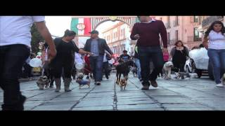 preview picture of video 'Caminatas Perrunas Zacatecas'
