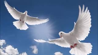 Летете гълъби