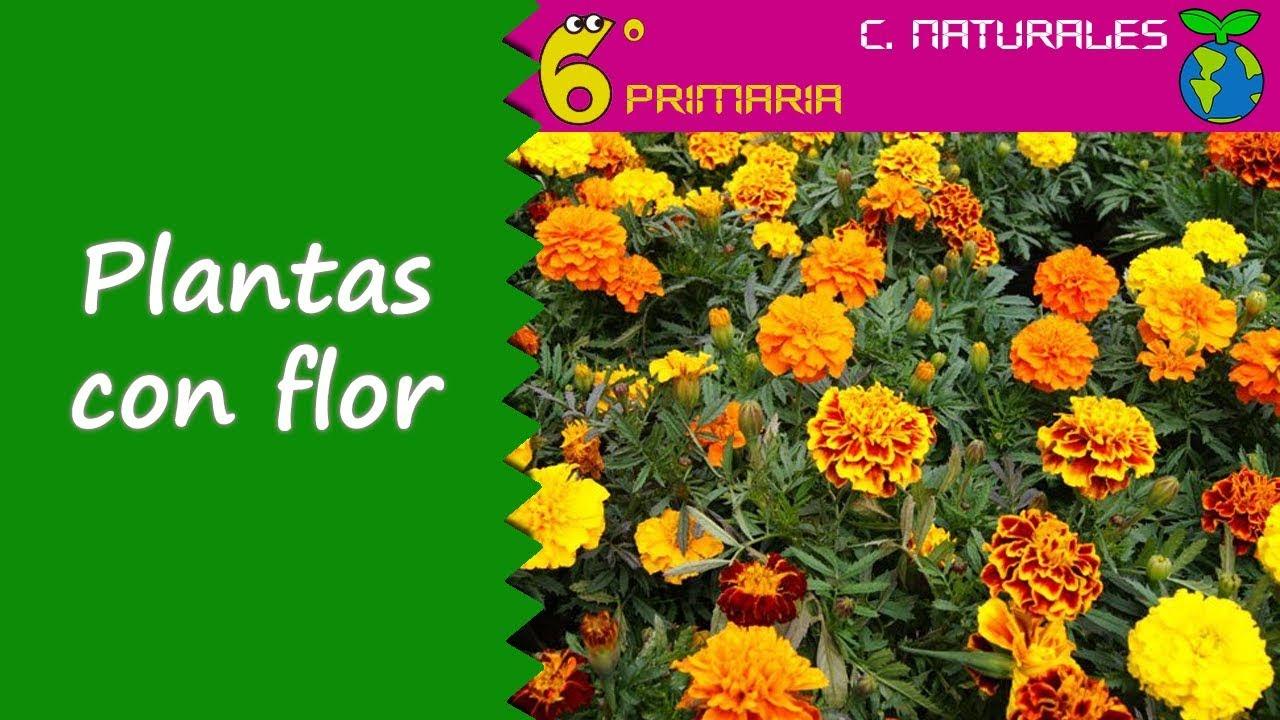 Plantas con flor. Naturales, 6º Primaria