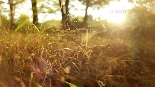 Beautiful Slow Instrumental -- Music For Studying, Background, Healing, Relax -- Relaxdaily N°062