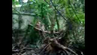 preview picture of video 'Penampakan tuyul di Basuki Rahmat Kota Palu'