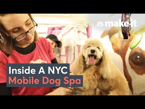, title : 'What It Takes To Run A Dog Grooming Business In NYC