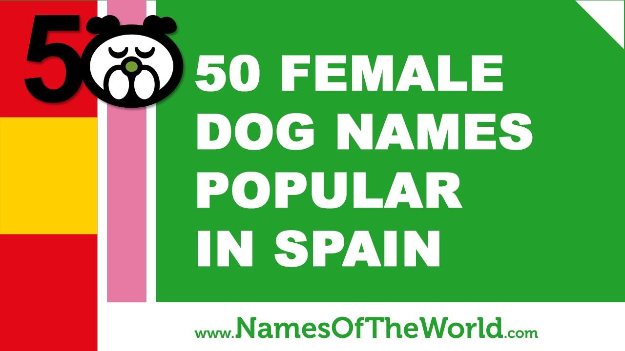 50 female dog names popular in Spain - www.namesoftheworld.net