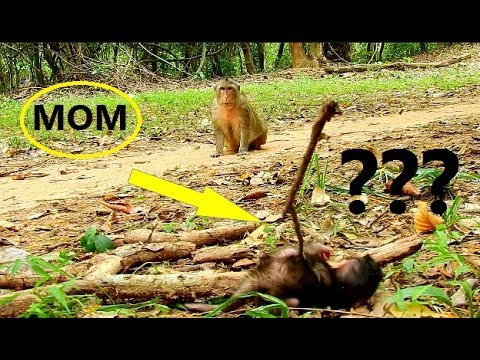 What Happen..!! Mom Lizzy look baby so far || Baby Lizza play alone with tiny branch.