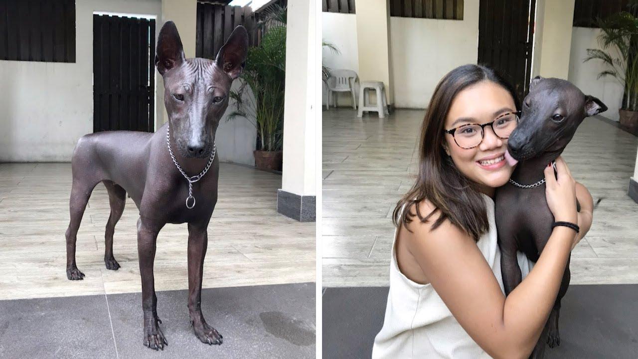 Живая собака, похожая на статую