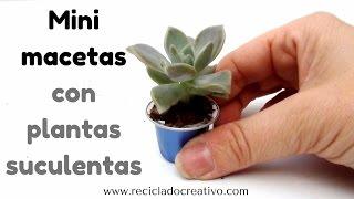 Mini macetas de plantas suculentas en cápsulas de café recicladas - minijardín