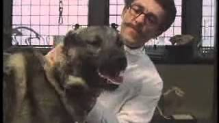 Behavioursimus Pavlov's Dogs Get Conditioned