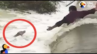 DROWNING Dog Rescued by AWESOME Men | The Dodo