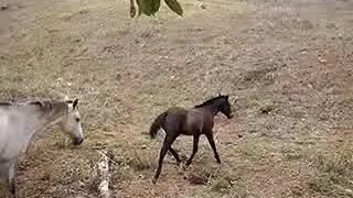 Equídeo Equino Diversos Não Registrado Potra Castanha - e-rural Imagens