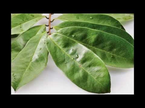 Video Obat Tradisional Penyakit Kelenjar Tiroid