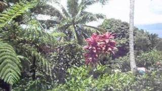 preview picture of video 'Fiji Holiday Rental Villa Maracuja in Savusavu, Vanua Levu.wmv'