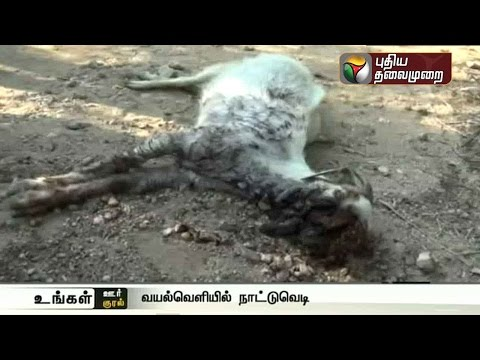 Goat-dies-after-biting-country-bomb-in-Erode