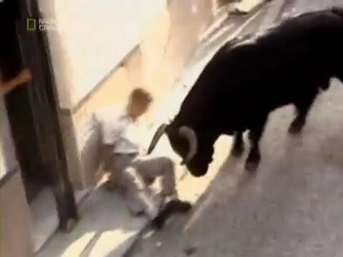 Бык покалечил человека