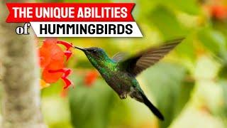 The Unique Abilities of Hummingbirds