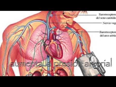 Disminuir la presión arterial superior 100