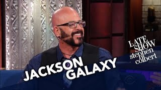 Cat Behaviorist Jackson Galaxy Converts Stephen Into A Cat Person