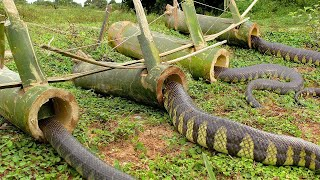 DIY Snake Trap Technology -  Learning To Make Bamboo Snake Trap