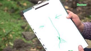 Посадка плодовых деревьев осенью видео