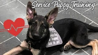 Puppy's First Month of Service Dog Training