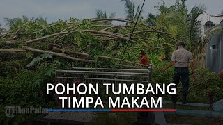 BPBD Kota Padang Terima 6 Laporan Pohon Tumbang, Ada yang Timpa Makam