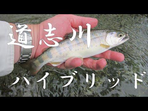 "[HD]YAMAME ""Flyfisher's eyes. No.41"""