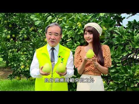 【在地鮮食尚】柚香柚圓柚多汁 晶瑩文旦報你知