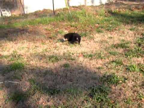 Bergitta playing outside
