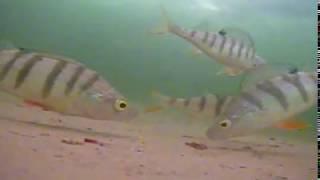 Отдых и рыбалка на красноярском море 2020