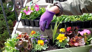 Come plant with me | Chicago flower boxes during Quarantine
