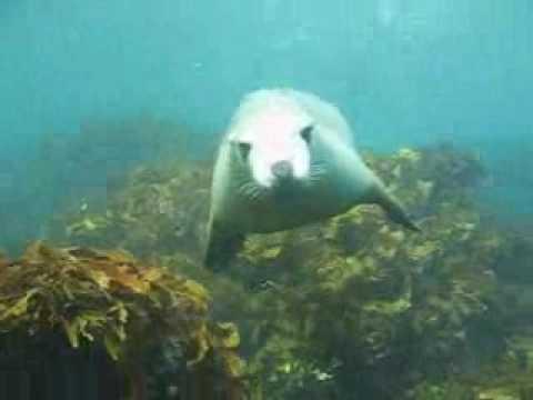 Albany WA - Seal Cove (Breaksea Island)