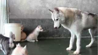 Kiche ritrova i suoi cuccioli