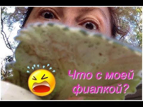 Причина возникновения пигментных пятен на лице