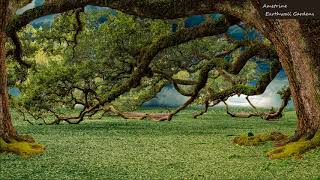 Ametrine - Earthwall Gardens (Original Mix)