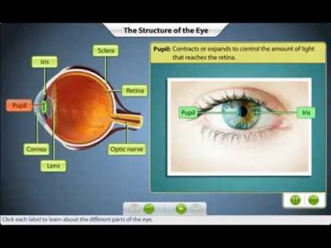 Îmbunătăți vederea conform Ayurveda
