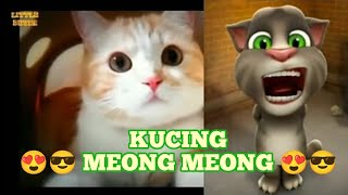 Lagu Kucing Meong Meong Tom Bernyanyi...